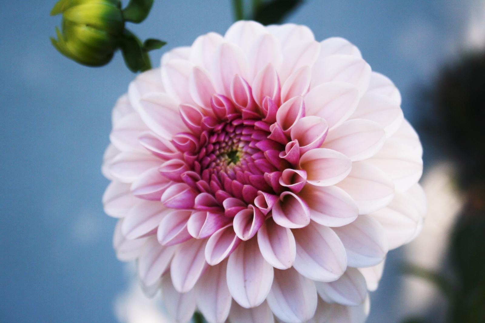Jarne a letne aranzmany a dekoracie - Z nasej zahrady...