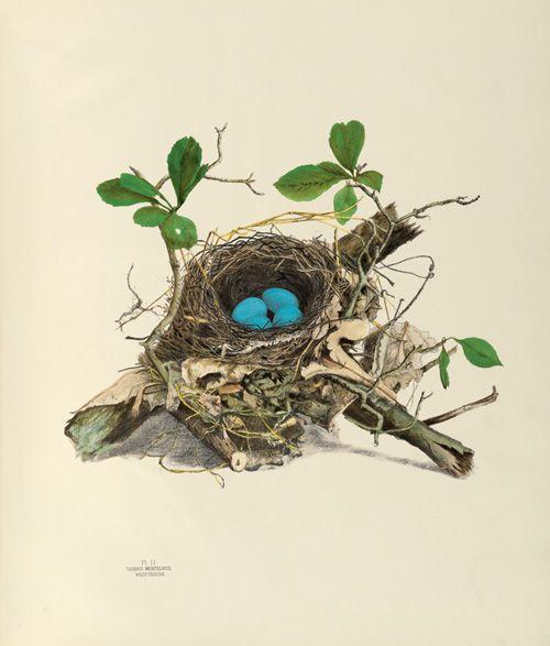 Ptáčkové všude, kam se podíváš :) - Obrázek č. 123