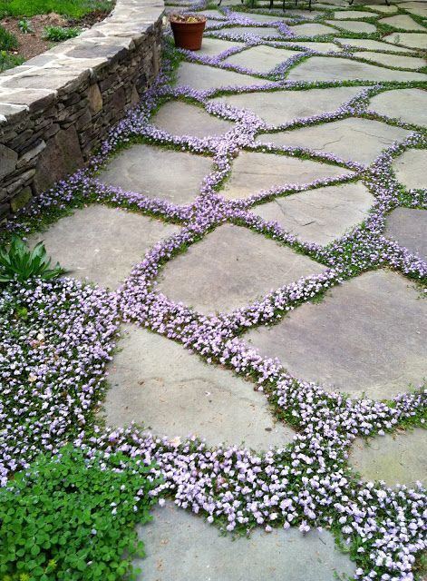 Zahradní chodníček - inspirace z internetu - Obrázek č. 100