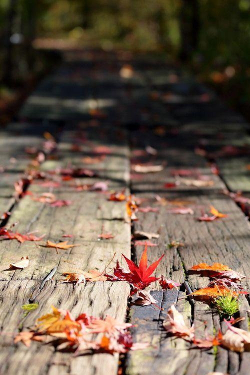 Podzimní blues - Obrázek č. 72