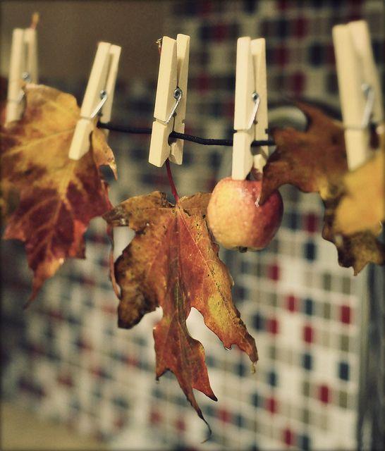 Podzimní blues - Obrázek č. 38