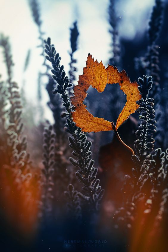 Podzimní blues - Obrázek č. 144