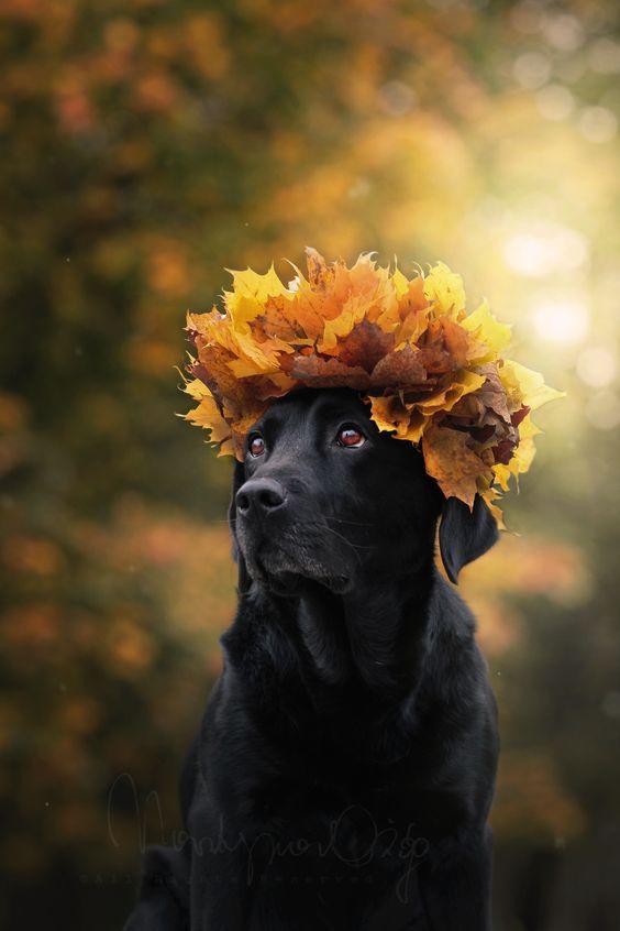 Podzimní blues - Obrázek č. 302