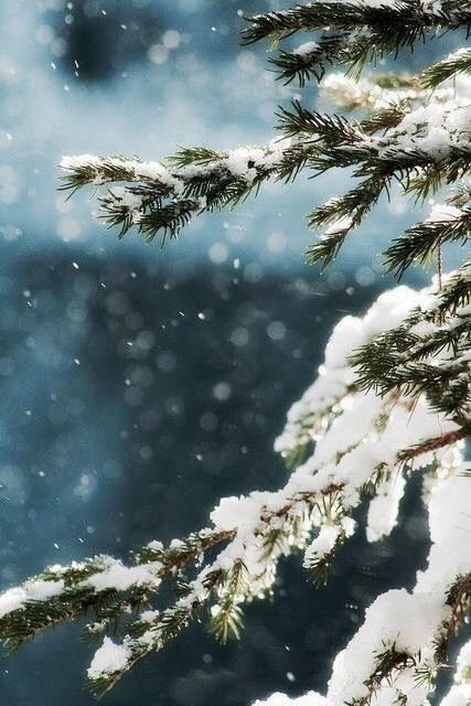 Hřejivé zimní pohlazení - Obrázek č. 55