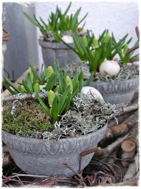 První jarní vlaštovky na vesnici - Obrázek č. 55