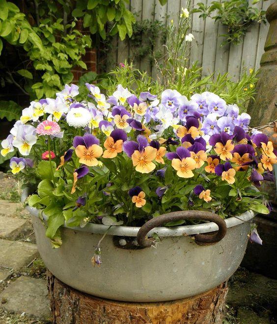 Zahradní inspirace - Obrázek č. 76