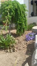 kúsok záhradky