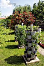 I takhle se dá pěstovat zeleninka.