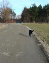Utekačka zozadu