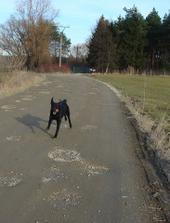 Utekačka spredu