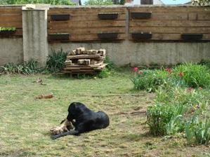Záhradka - už to rastie