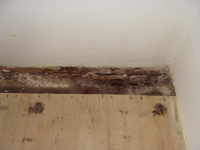 Domov - Asi 10% podlahy muselo ísť von, našťastie to bolo po obvodoch miestnosti, tak v nej teraz máme skladisko. Zvyšok dreva paráda - okrem diskolorizácie žiadna pleseň, vlhkosť...