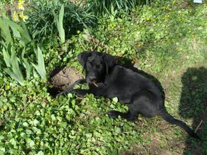 Záhradkárčim