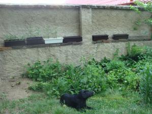 Sunny a vpozadí moje pestiteľské snaženie