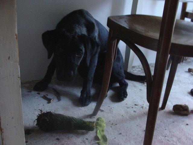 Domov - Ten kaktus dostáva zabrať