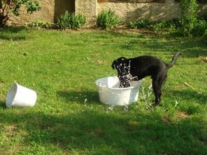 Vodný pes
