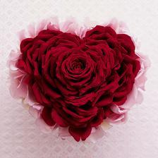 ruža drzí štavefu