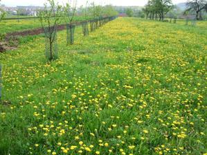 a takhle krasne nam ted nase budouci zahrada kvete...