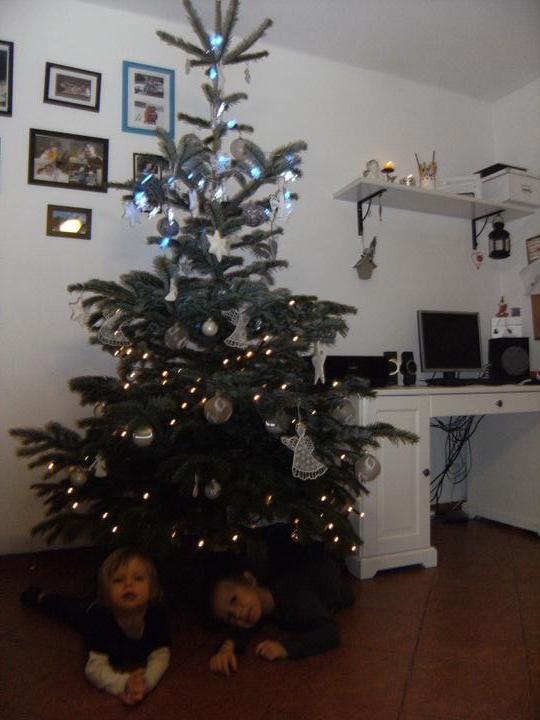 *** domov*** - vánoční stromeček 2011