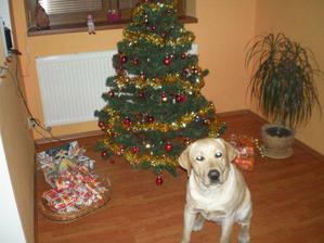 Lucky u vánočního stromečku
