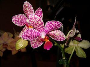 Mám doma i orchidee
