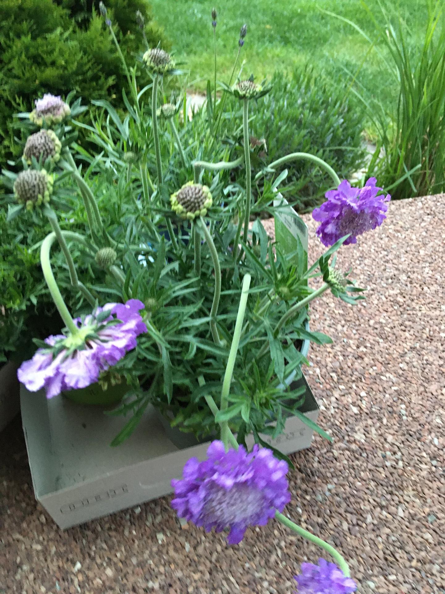 Zahrada 4.rok - Obrázok č. 5