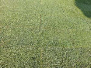 zlená je tráva ....