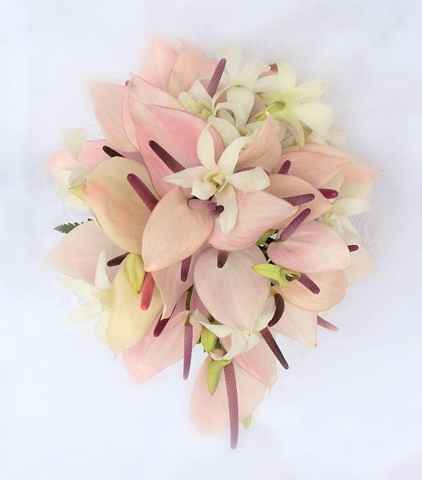 Co kdy kvete - Anthurium