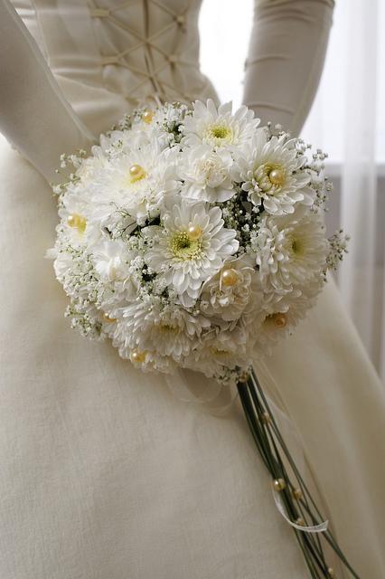 Co kdy kvete - Chrysanthemum