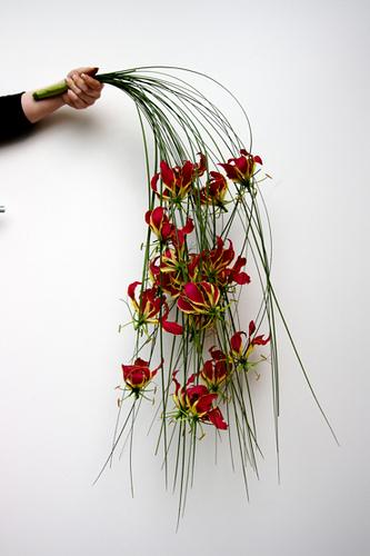 Co kdy kvete - Gloriosa
