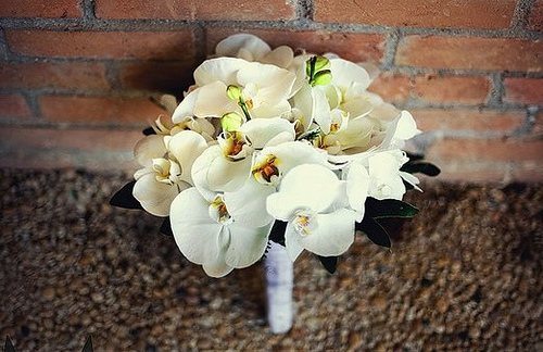 Co kdy kvete - Phalaenopsis