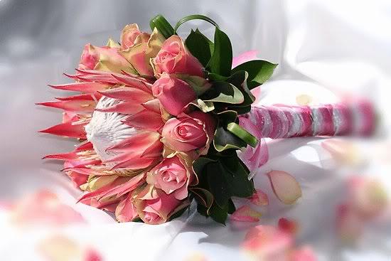 Co kdy kvete - Protea