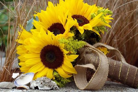 Co kdy kvete - Helianthus - slunečnice
