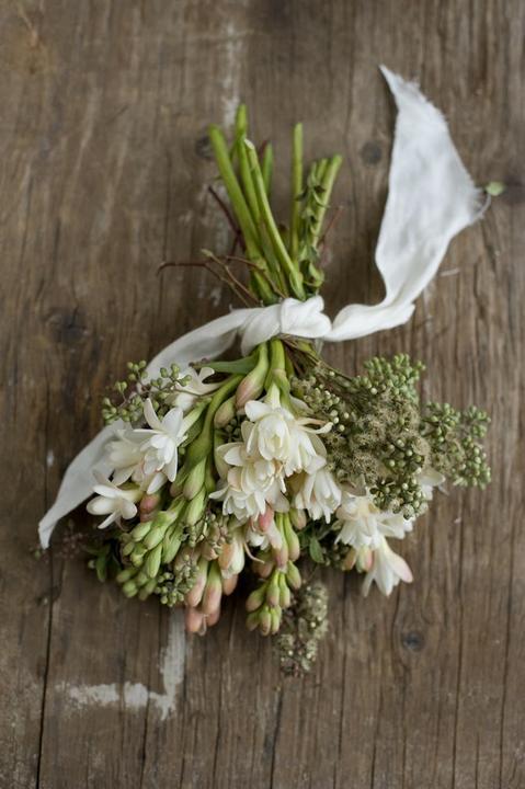 Co kdy kvete - Polianthus