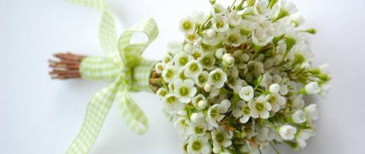 Chamelaucium - wax flower