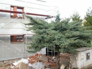 """Pohled z ulice, """"Baobab"""" stavbu přežil:-)"""