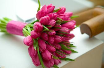vysněné tulipány