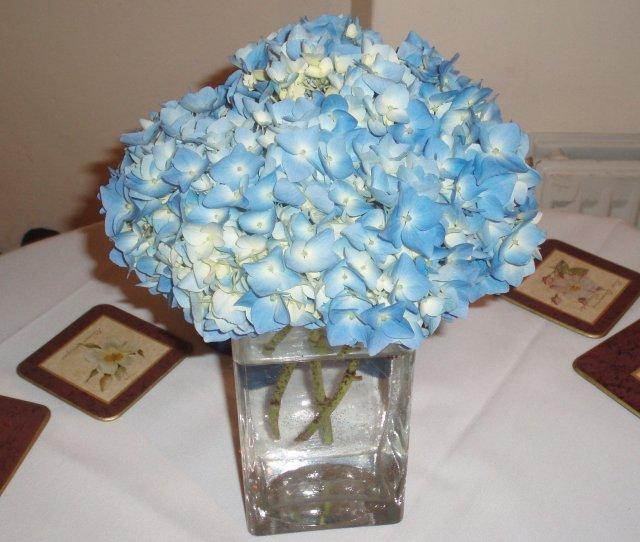 Od prstienka ku svadbe - tieto kvietky by mohli ist na stoly,prekrasna farba, samozrejme v inej vazicke