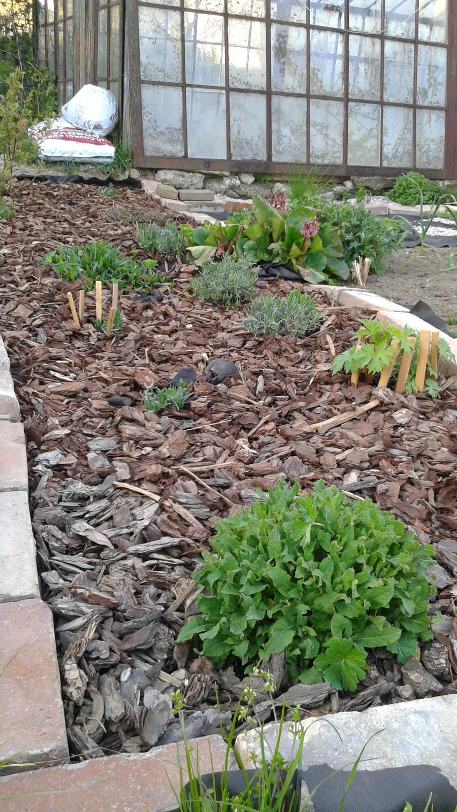 Zahrada od začátku - Obrázek č. 8