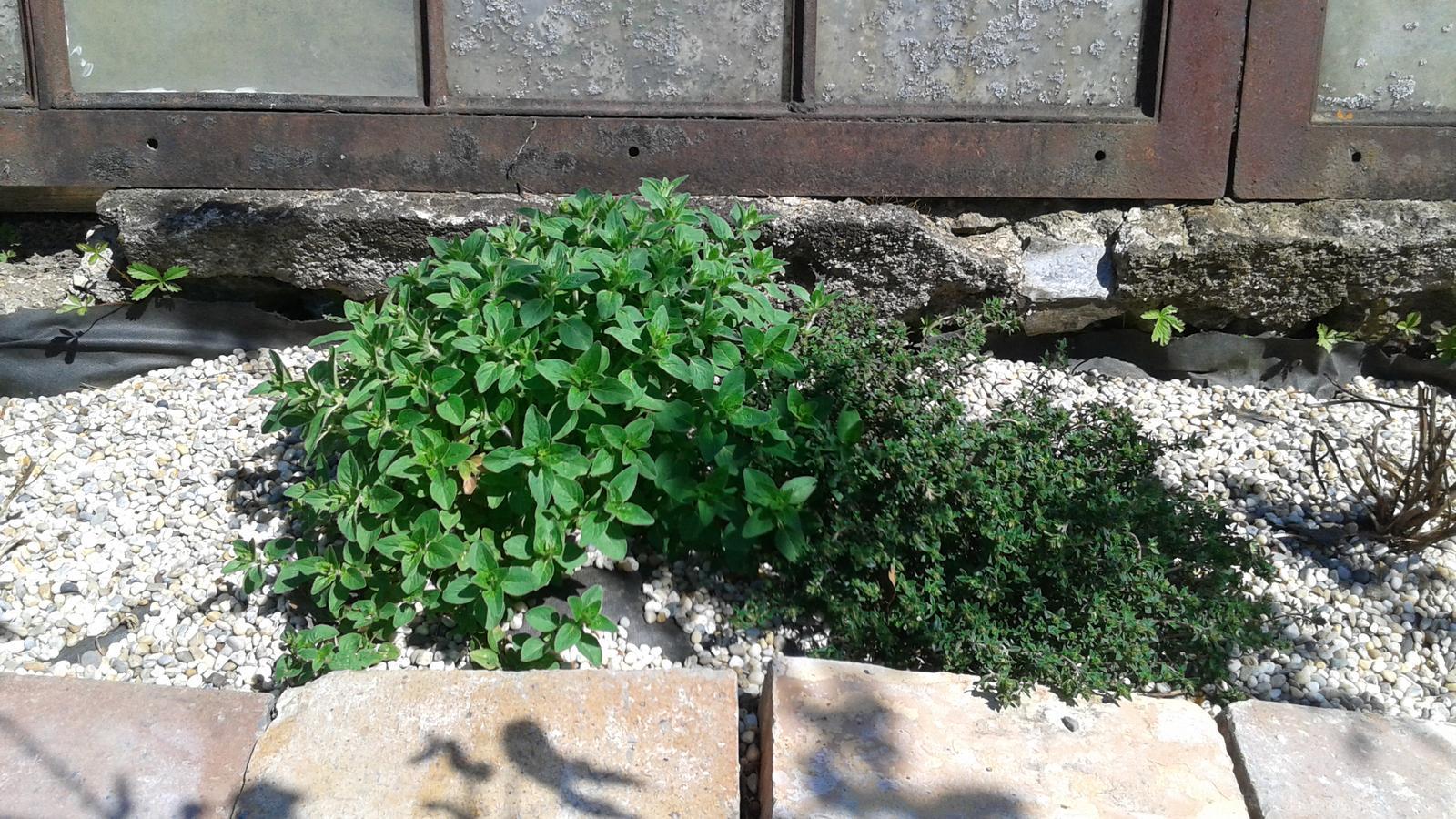 Zahrada od začátku - Obrázek č. 9