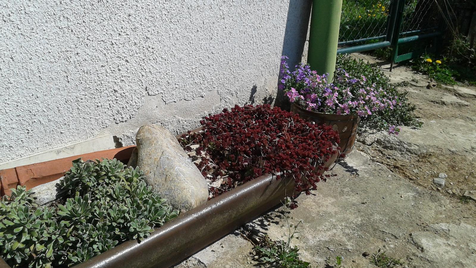 Zahrada od začátku - Obrázek č. 11