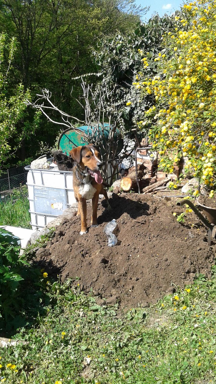 Zahrada od začátku - hlínu navozil sám :-D