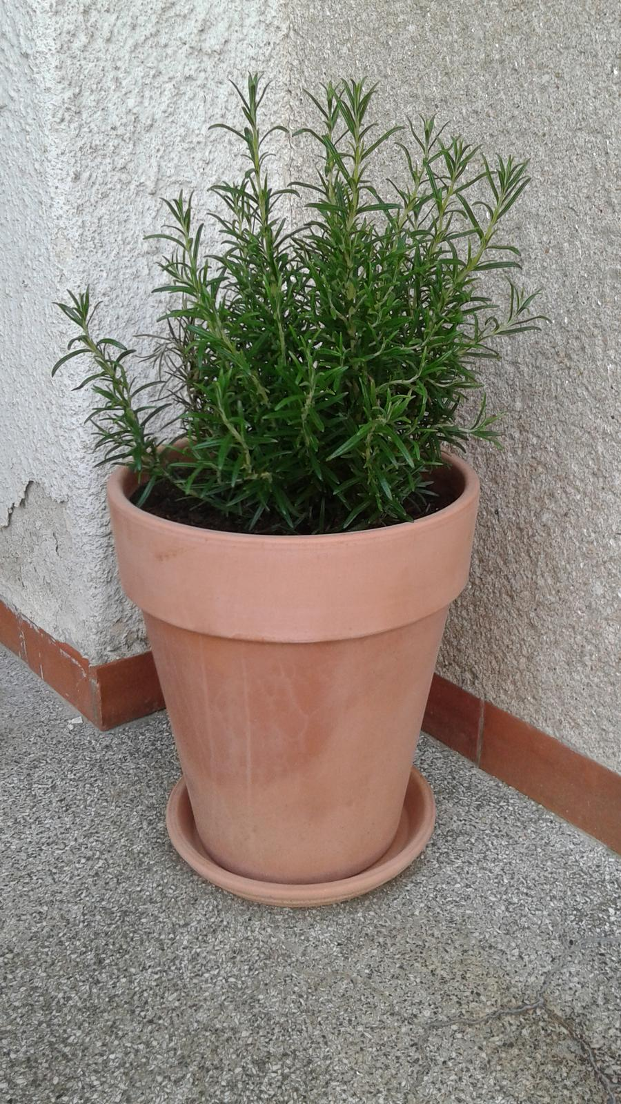 Zahrada od začátku - babička měla vždycky na schodech rozmarýn, tak je potřeba pokračovat v tradici :-)