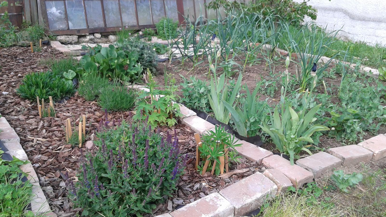 Zahrada od začátku - rozdíl 3 týdnů od předchozí fotky - všechno poporostlo