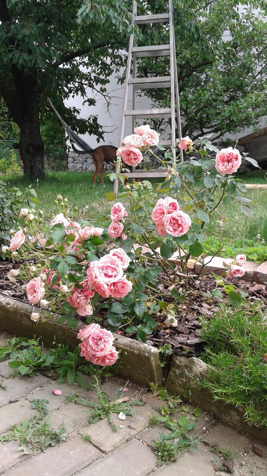 Zahrada od začátku - Obrázek č. 30