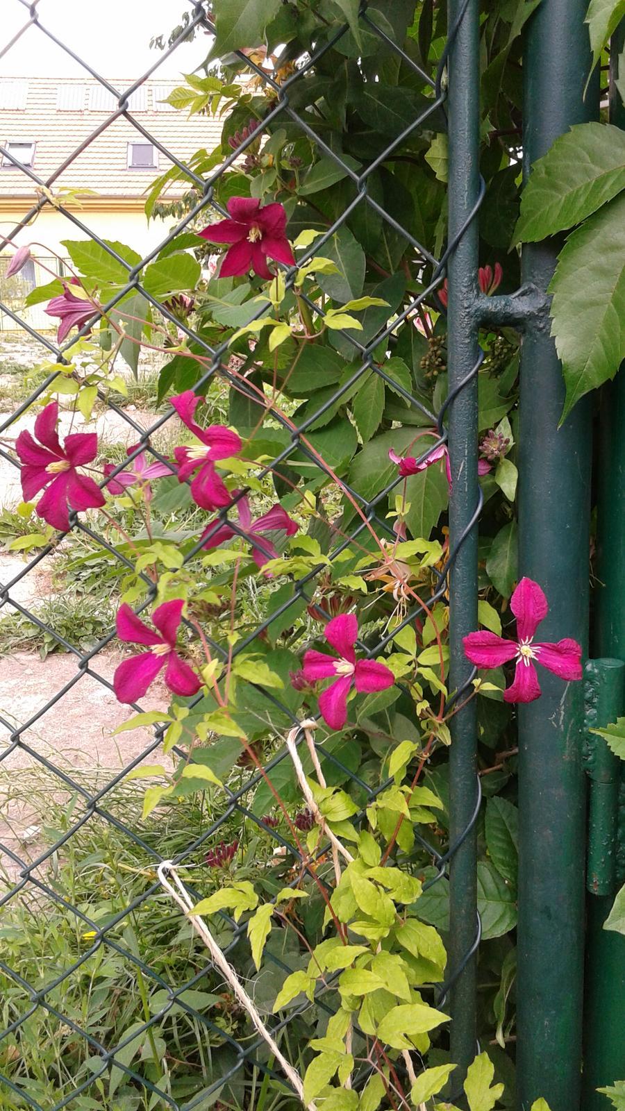 Zahrada od začátku - Obrázek č. 31