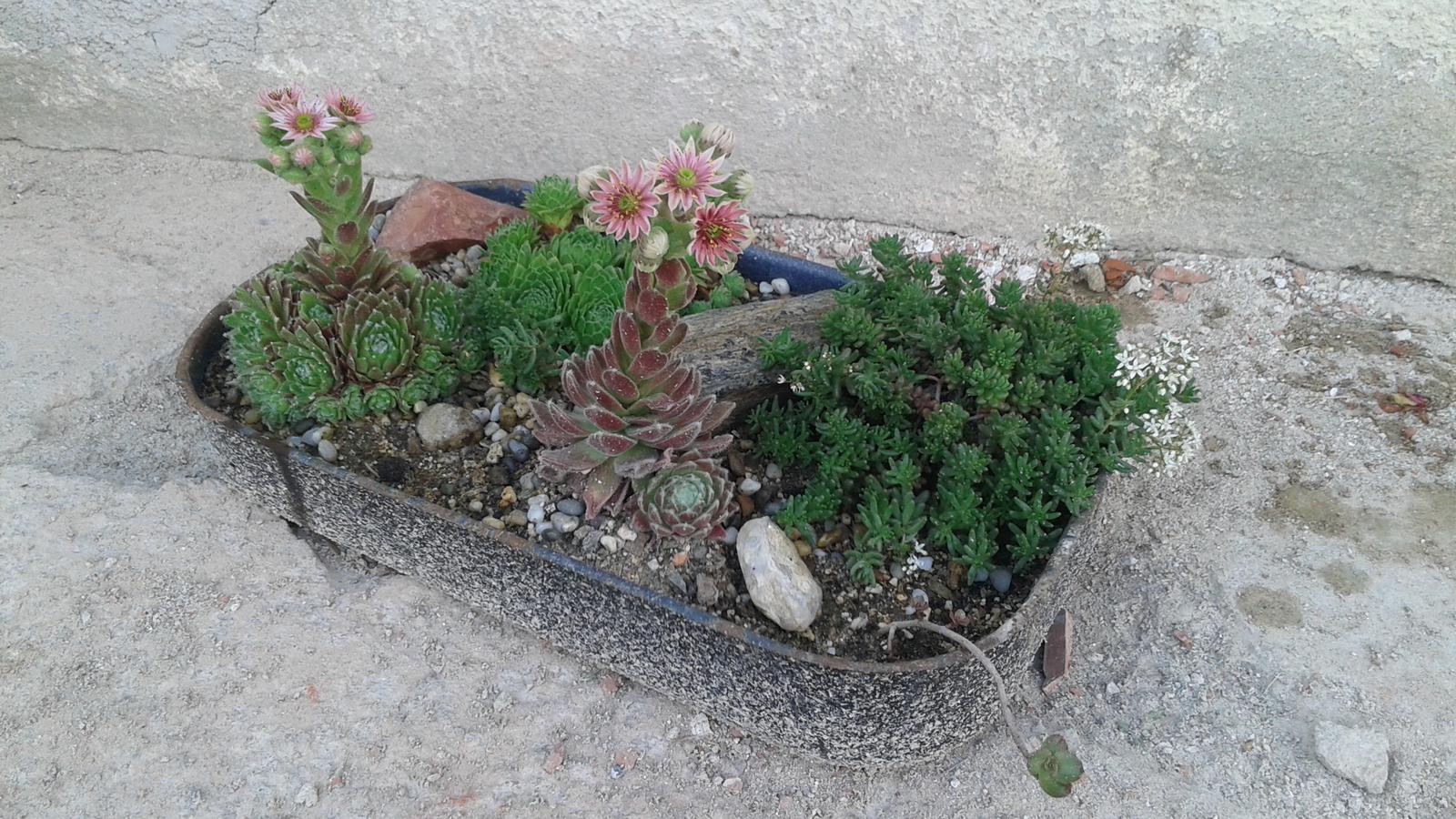 Zahrada od začátku - Obrázek č. 32