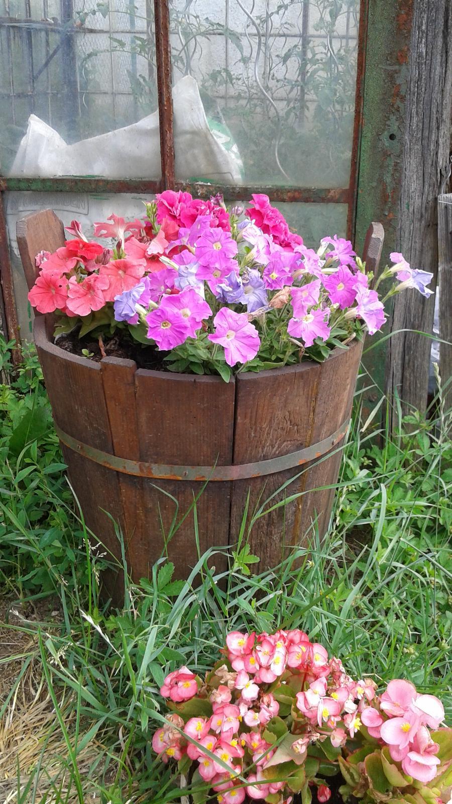 Zahrada od začátku - Obrázek č. 33