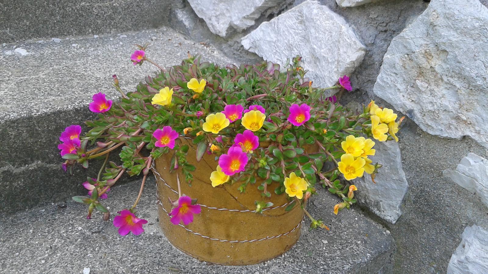 Zahrada od začátku - Obrázek č. 34