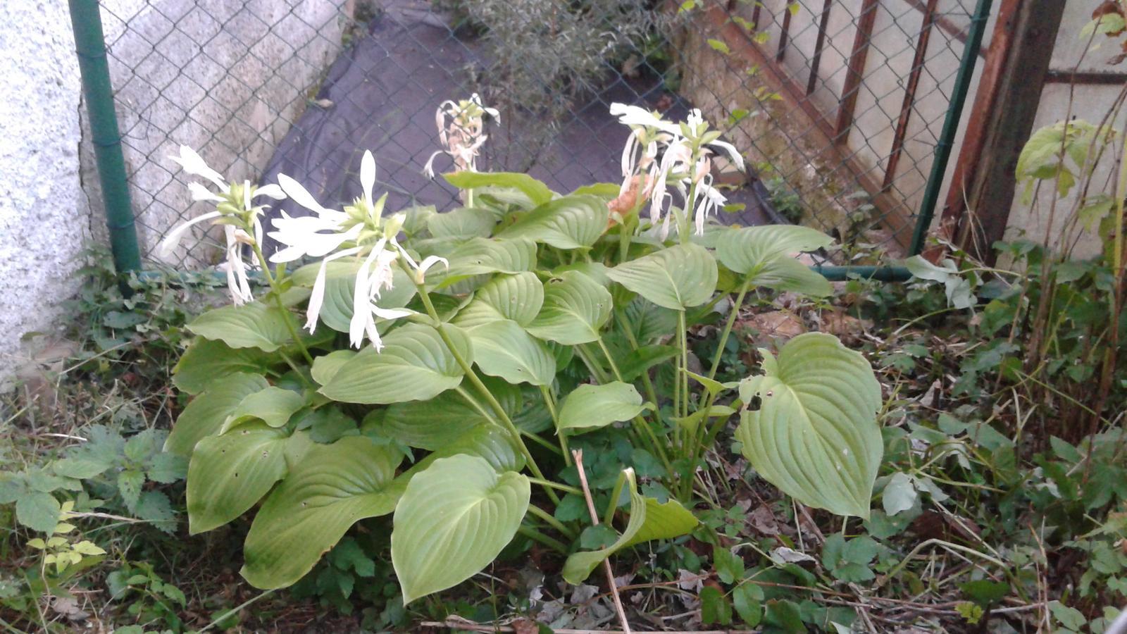 Zahrada od začátku - Obrázek č. 35